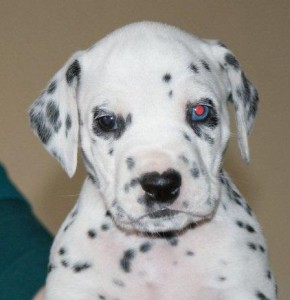 jack blauw oog (4)