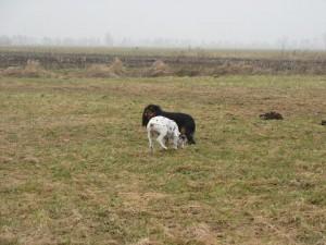 puppy's  01-03-12 004.1