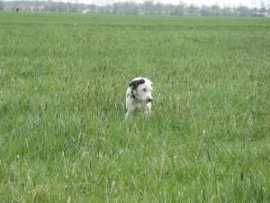 puppy's  08-04-12 017.1