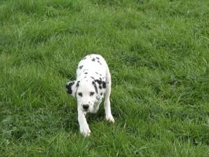 puppy's  08-04-12 023.1