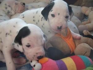 puppy's 23-1 5.1