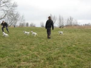puppy's  26-02-12 001.1