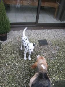 puppy's  29-02-12 002.1