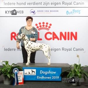 best_of_breed_837_lr_dogshow_eindhoven_2019_kynoweb_ky3_6944_20190202_11_01_24